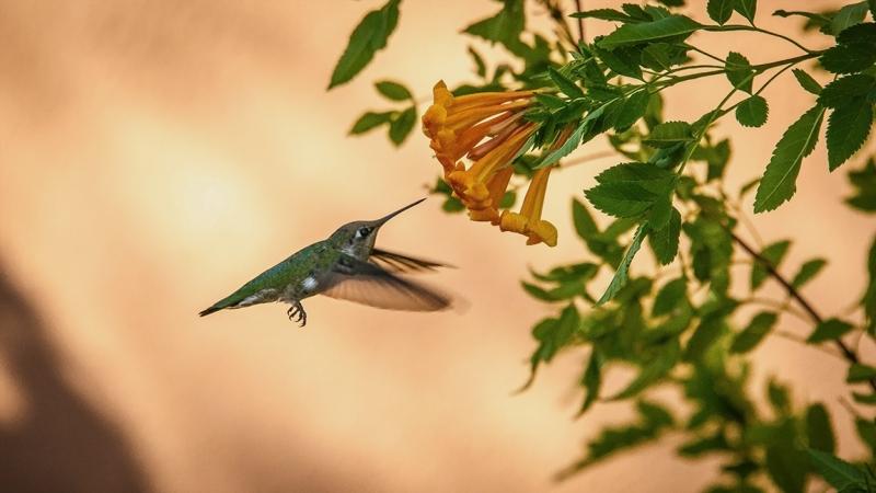 Flowers and Hummingbirds 11-02-13-8666 blog