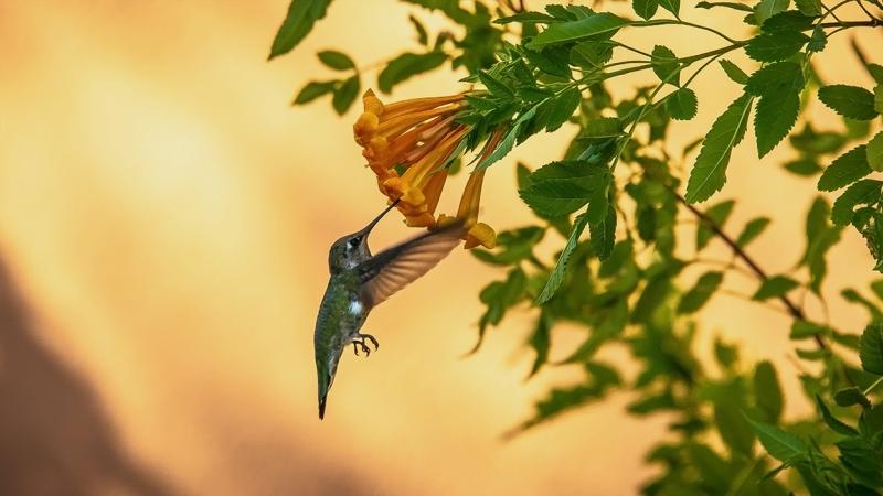 Flowers and Hummingbirds 11-02-13-8667 blog
