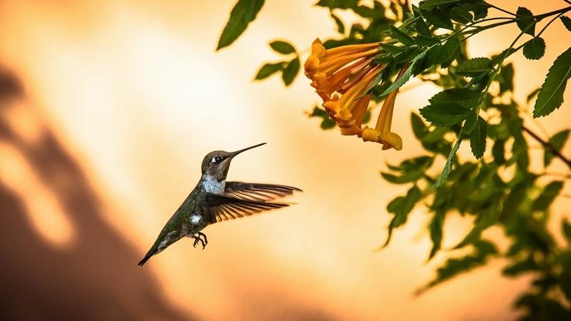 Flowers and Hummingbirds 11-02-13-8668 blog