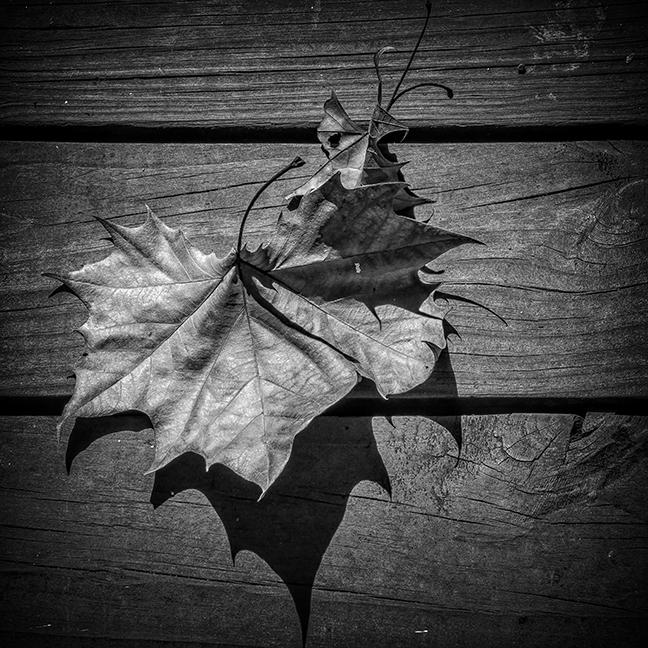 Leaf B-W blog