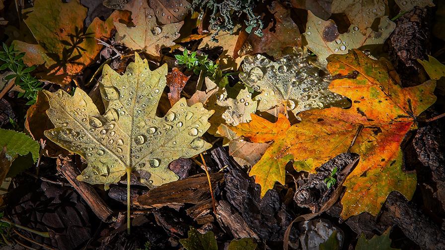 Fall Morning Leaves HD blog