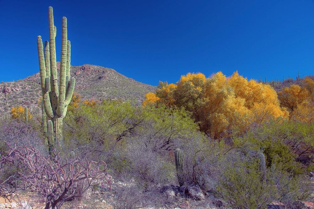 Sabino Canyon Colors Dec 2013-9177 blog