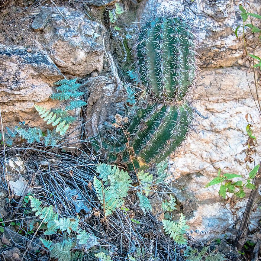 Sabino Canyon Colors Dec 2013-9198 blog