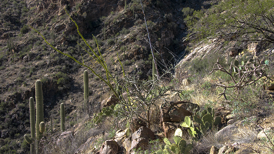 Ventana Canyon-9122 blog
