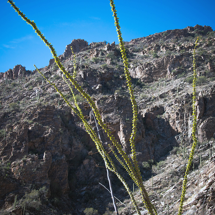 Ventana Canyon-9123 blog