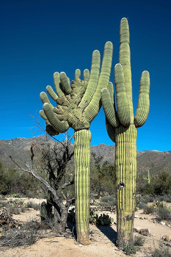 Beyond Tucson Event-9492 blog