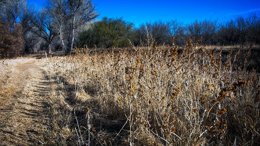 deAnza Trail 2014-9520 blog