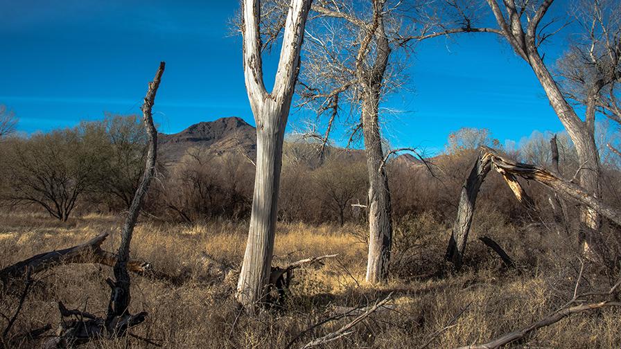 deAnza Trail 2014-9522 blog