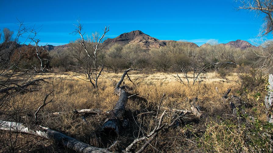 deAnza Trail 2014-9524 blog