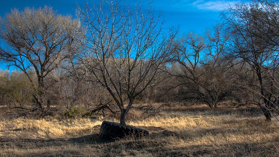 deAnza Trail 2014-9527 blog