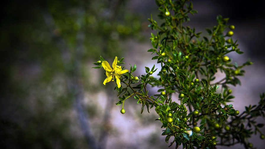 Flower Creaso-9649 blog