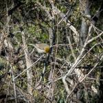 Ned's Nature Walk-9730blog