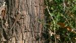 Ned's Nature Walk-9753blog