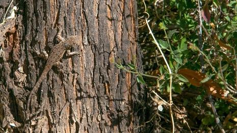 Ned's Nature Walk-9753 blog
