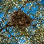 Ned's Nature Walk-9757blog