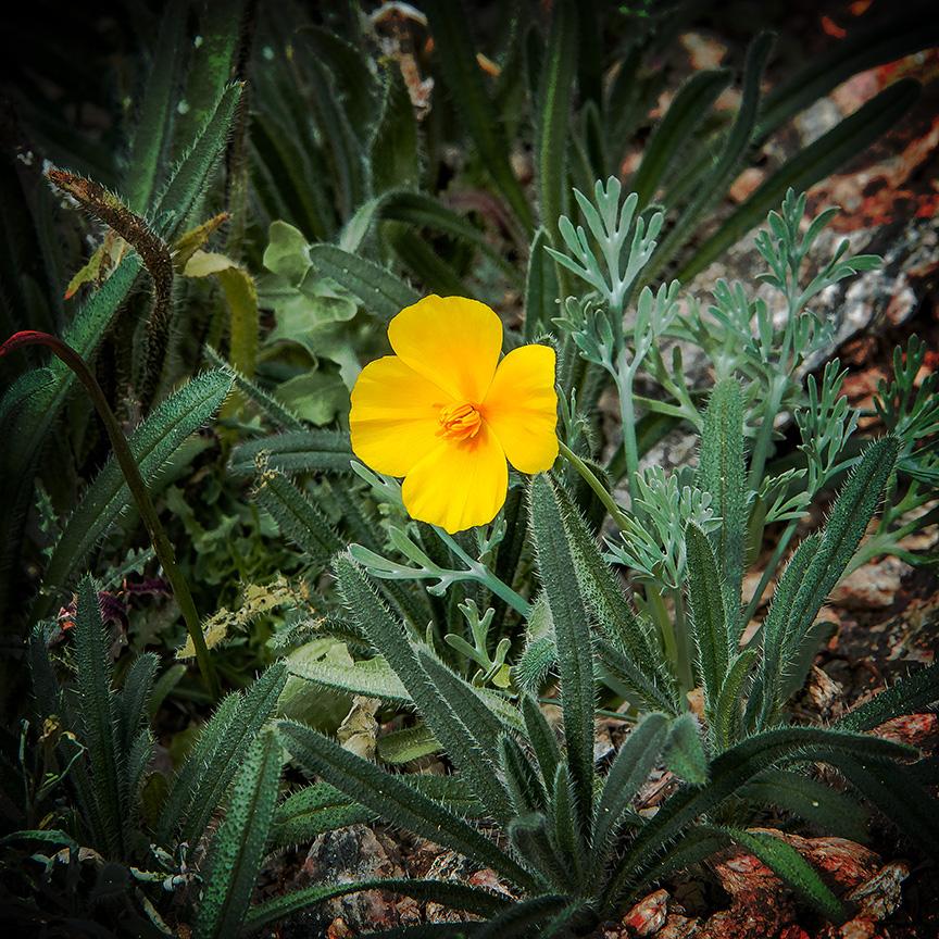 Saguaro Cactus-9683 blog