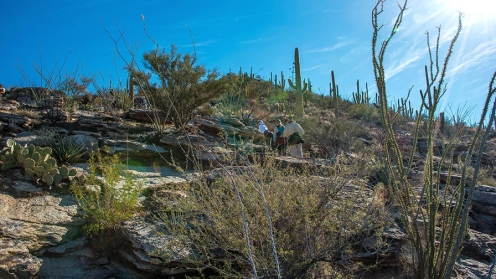Blackett's Ridge-9883 blog
