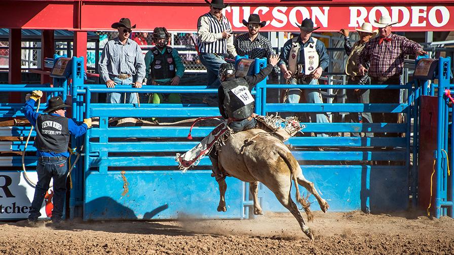 Bull Riding-0336 blog
