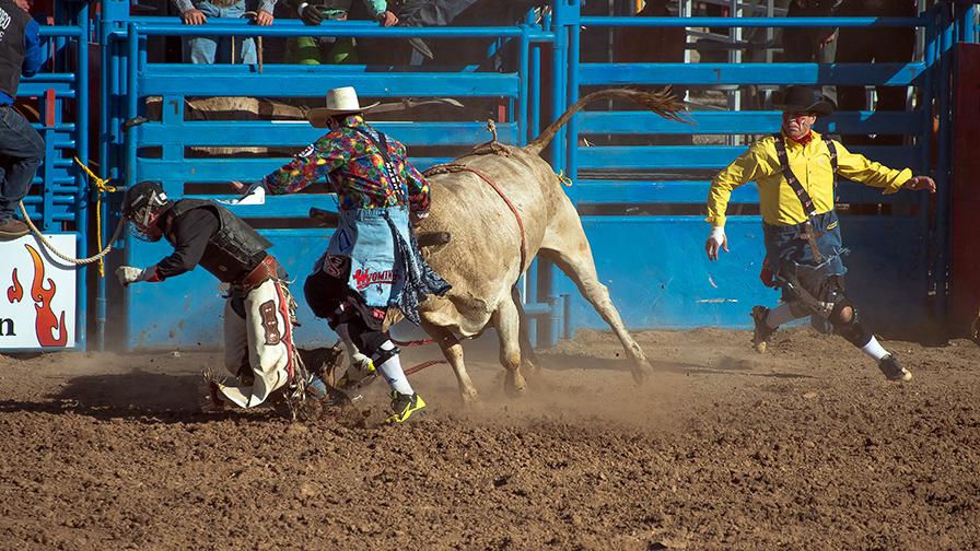 Bull Riding-0341 blog