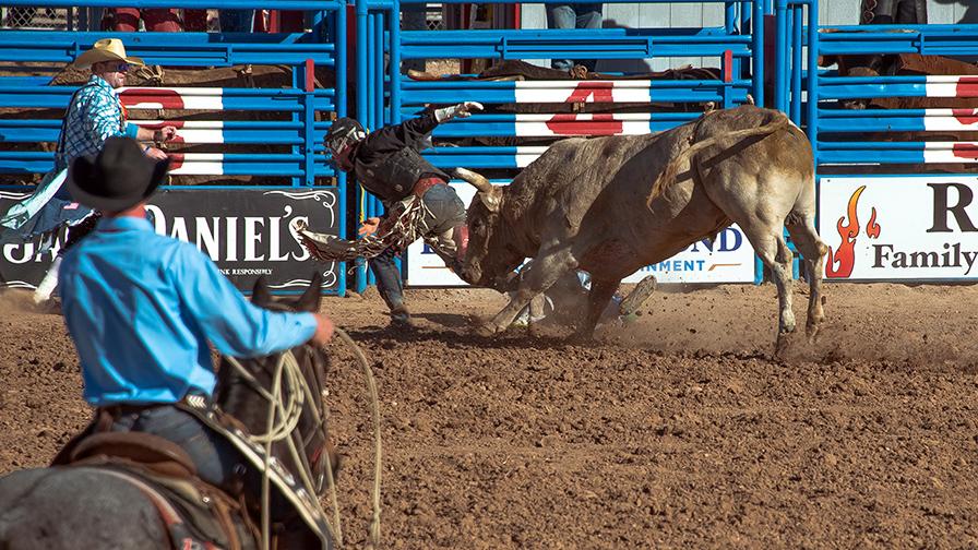 Bull Riding-0343 blog