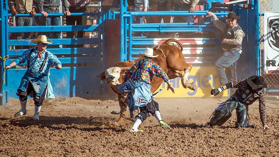 Bull Riding-0389 blog