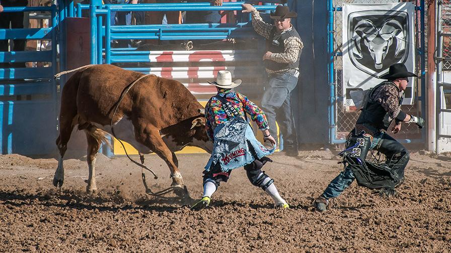 Bull Riding-0390 blog