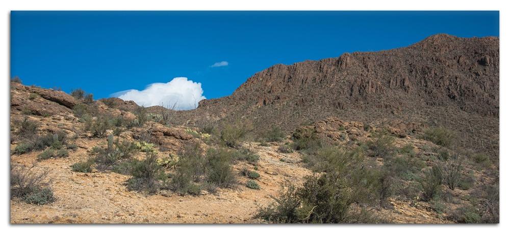 Desert Museum-9776 blog