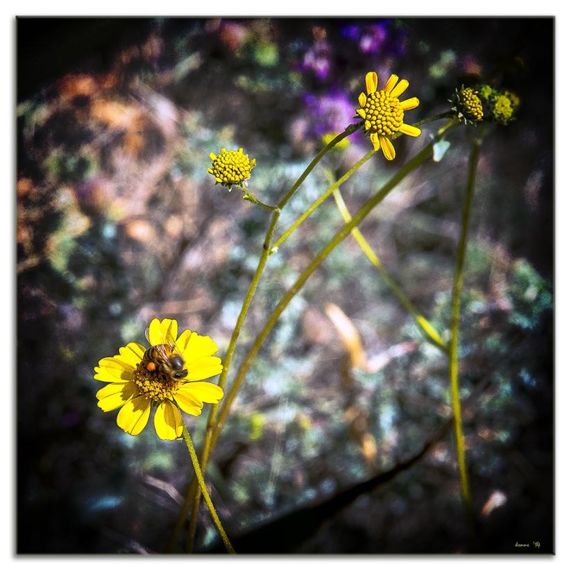 Desert Museum-9778 blog