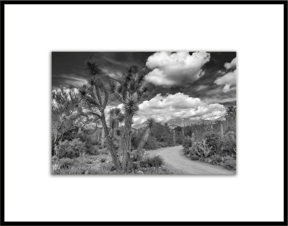 Desert Museum-9824 B-W blog