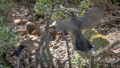 Desert Museum-9834 blog