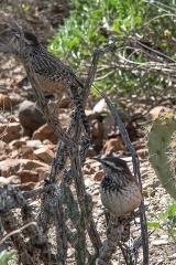 Desert Museum-9836 blog
