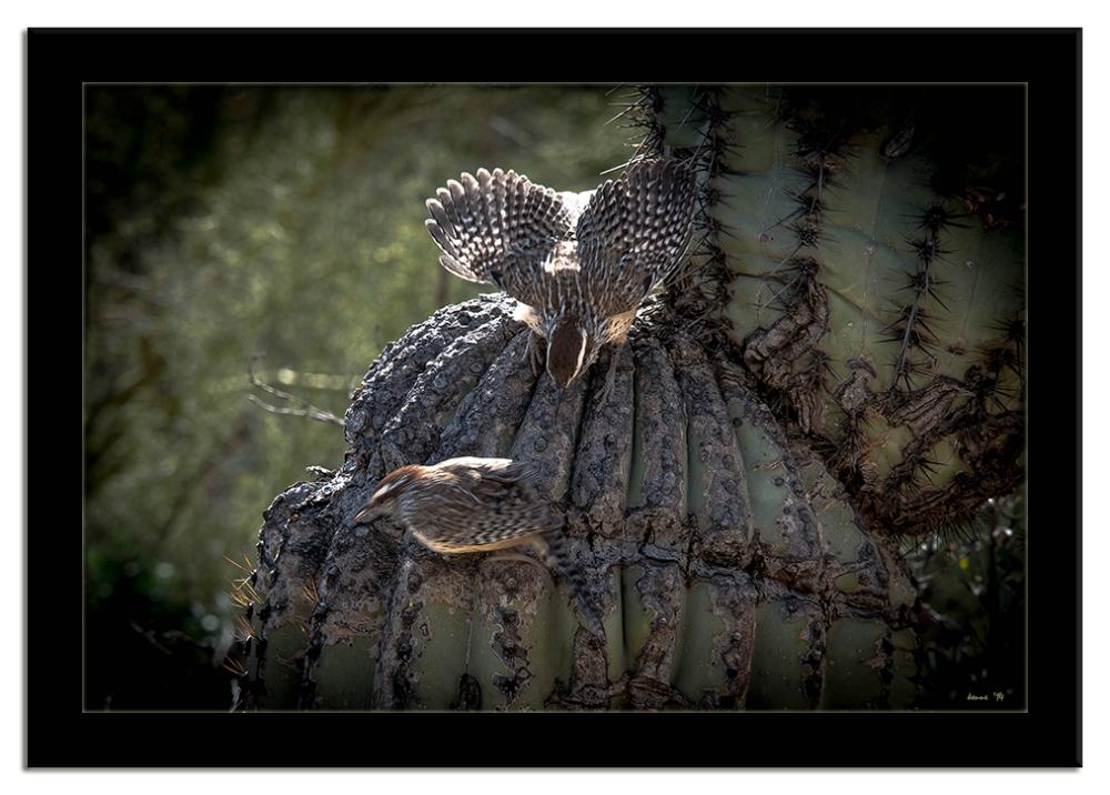 Desert Museum-9840 blog