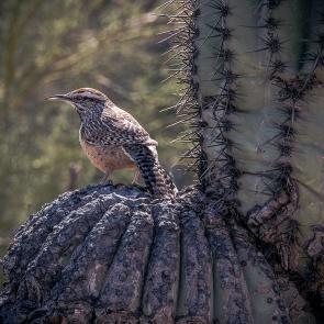 Desert Museum-9843 blog