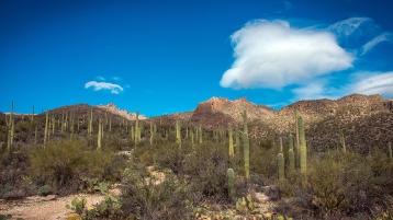 Saguaro Cactus-9657 blog
