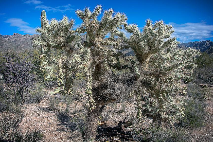 Saguzro Cactus January 27, 2014-9646-2 blog