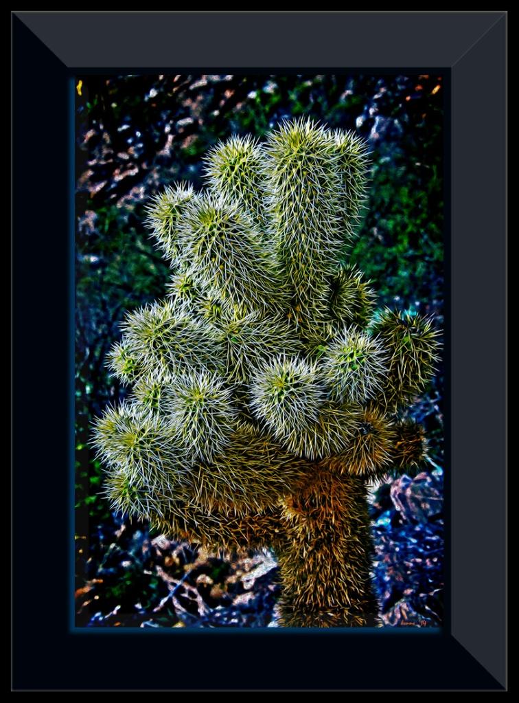Saguzro Cactus January 27, 2014-9682 HD_color my teddybear