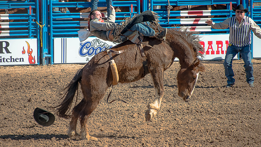 Tucson Rodeo 2014-0103 blog