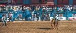 Tucson Rodeo 2014-0122blog