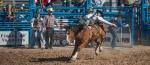 Tucson Rodeo 2014-013blog6