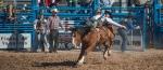 Tucson Rodeo 2014-0136blog