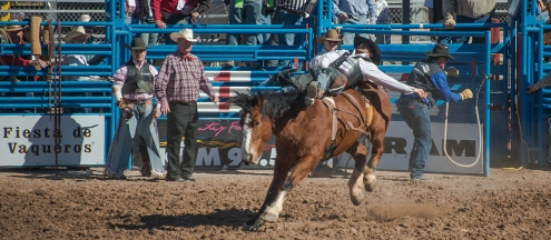 Tucson Rodeo 2014-0136 blog