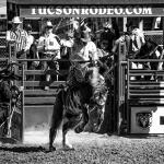 Tucson Rodeo 2014-0210_blog