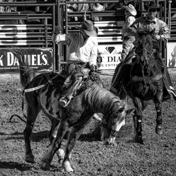 Tucson Rodeo 2014-0211_blog II