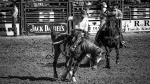 Tucson Rodeo 2014-0211_blog