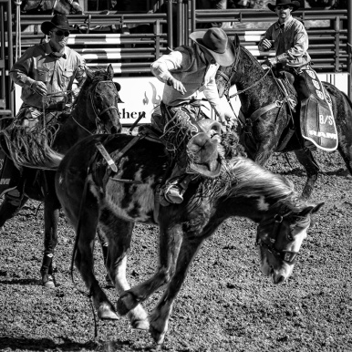 Tucson Rodeo 2014-0213_blog II