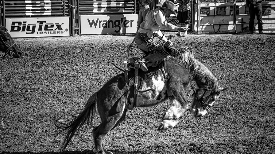 Tucson Rodeo 2014-0216_blog