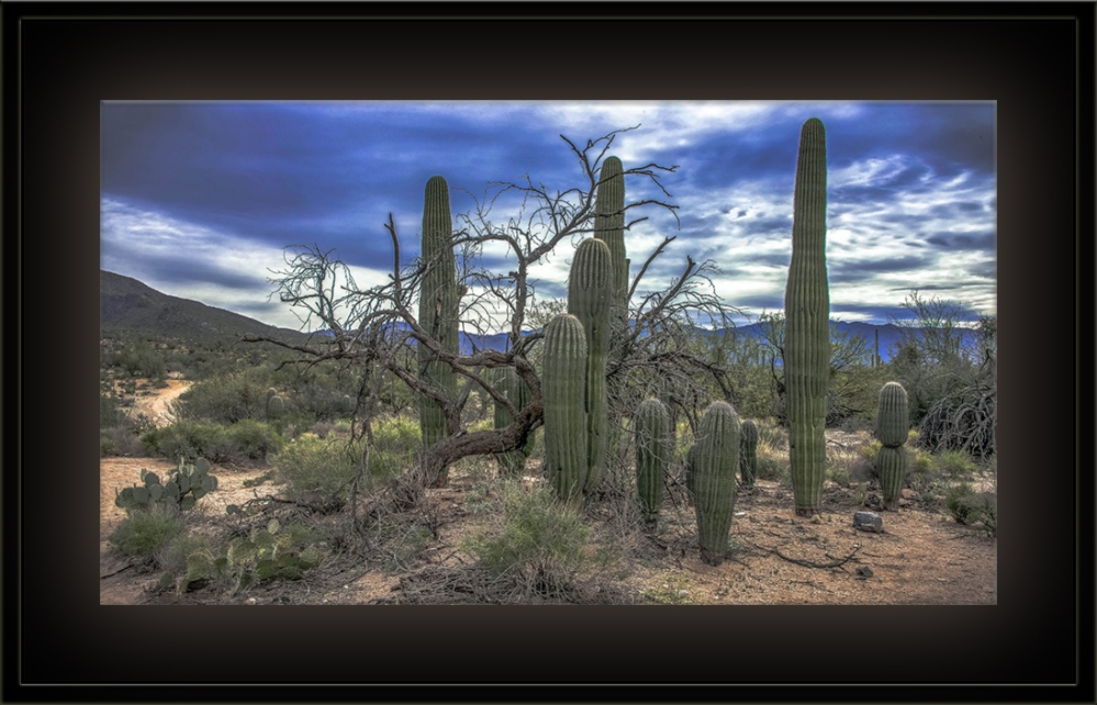 Tuesday Nature Walk HDR blog-