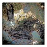 4-H Group-0862 Roadrunner in nest blogframed
