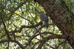 Cooper's Hawk (1 of 1)-4blog