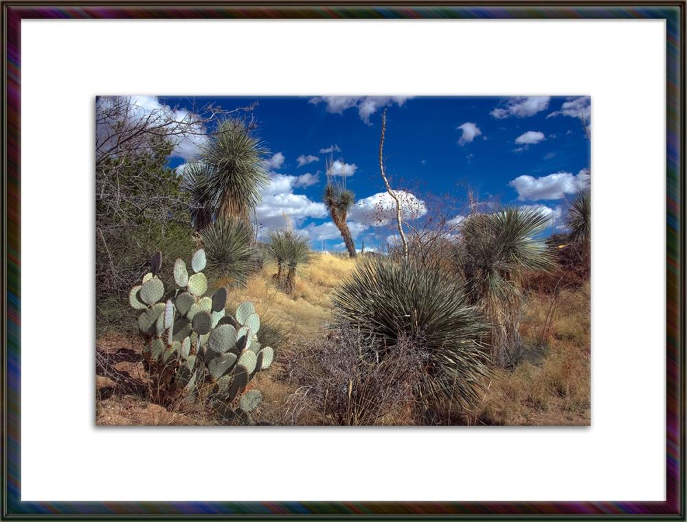 Grassland-9860 blog